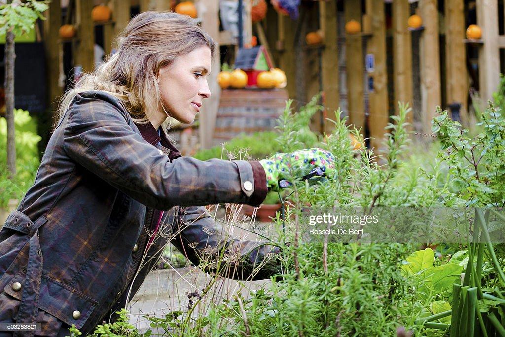 Woman Gardner Taking Care Of Plants, Prune. : Stock Photo