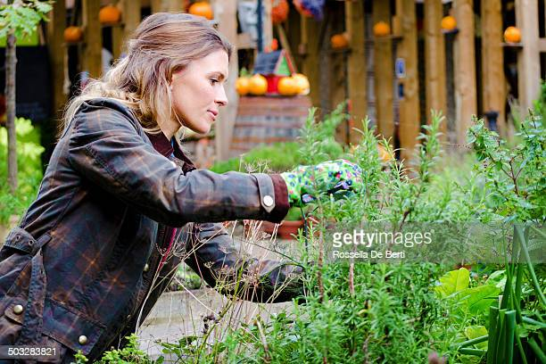 woman gardner taking care of plants, prune. - tuinieren stockfoto's en -beelden