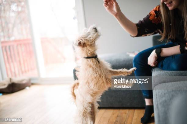 woman giving dog training treat - patio doors stock pictures, royalty-free photos & images