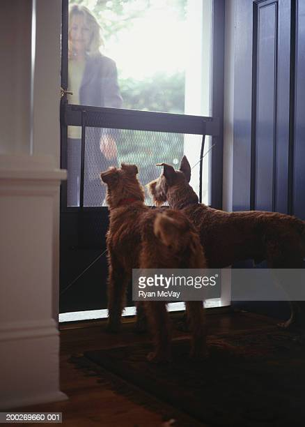 Woman greeting Irish Terriers at door of home