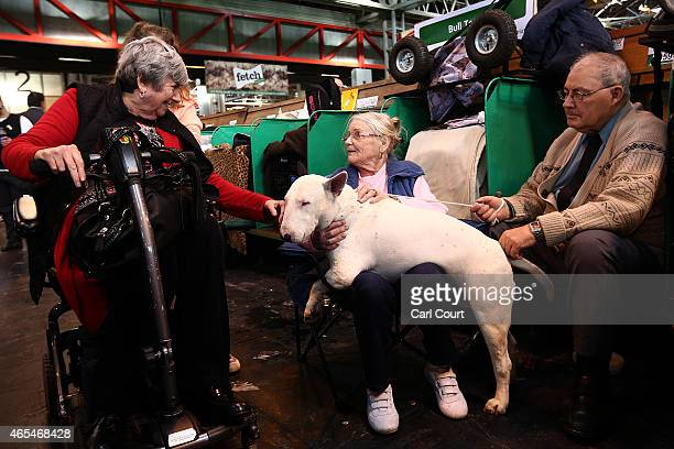 Woman greets a Bull Terrier on the third day of Crufts dog show at the National Exhibition Centre on March 7, 2015 in Birmingham, England. First held...