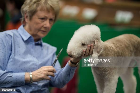 Bedlington Terrier Crufts 2013 2018 Crufts Dog...