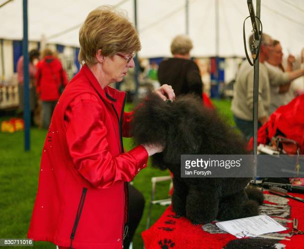 A woman grooms her poodle during the 194th Sedgefield Show on August 12 2017 in Sedgefield England The annual show is held on the second Saturday...