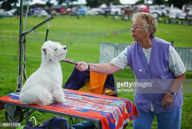 A woman grooms her Terrier dog before competing during the 194th Sedgefield Show on August 12 2017 in Sedgefield England The annual show is held on...