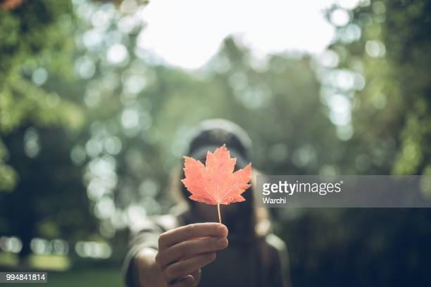 vrouw hand holding rood esdoornblad in een canadese park - esdoornblad stockfoto's en -beelden