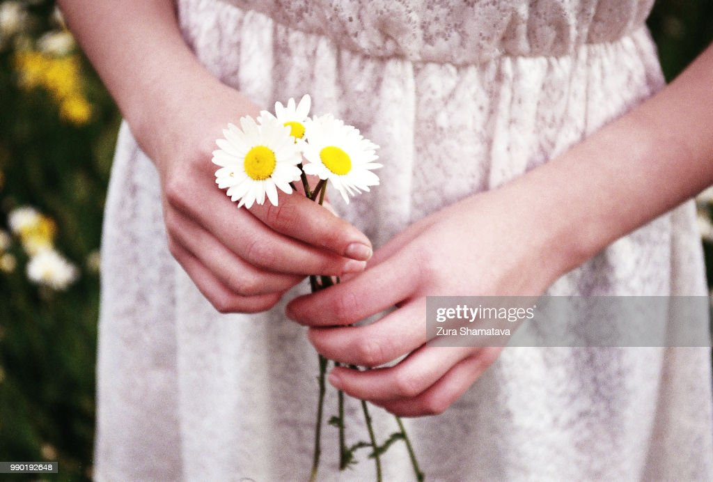 Woman hands holding Chamomiles : Stock Photo