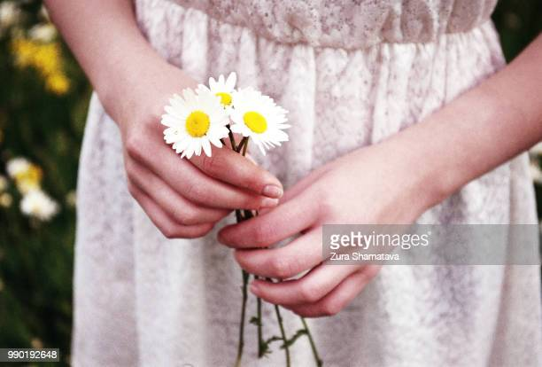 Woman hands holding Chamomiles
