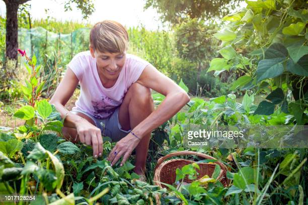 Woman harvesting Bush bean