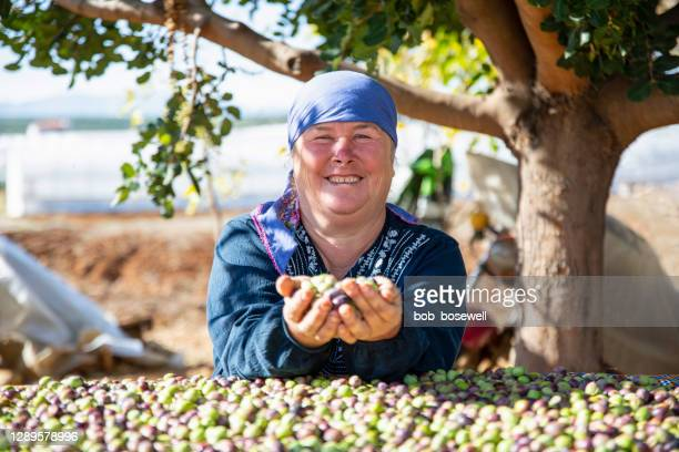 woman harvesting olives - turkey middle east stock pictures, royalty-free photos & images
