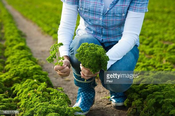 Woman harvesting parsley