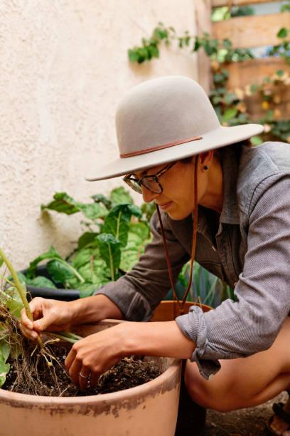 Woman harvesting potato in back yard
