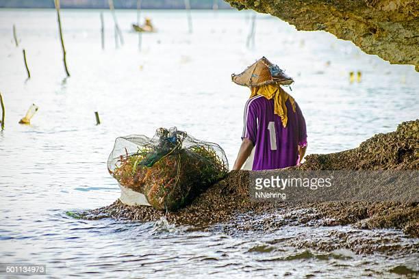 woman harvesting seaweed