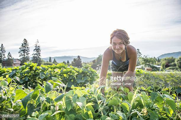 Woman harvests organic green beans.