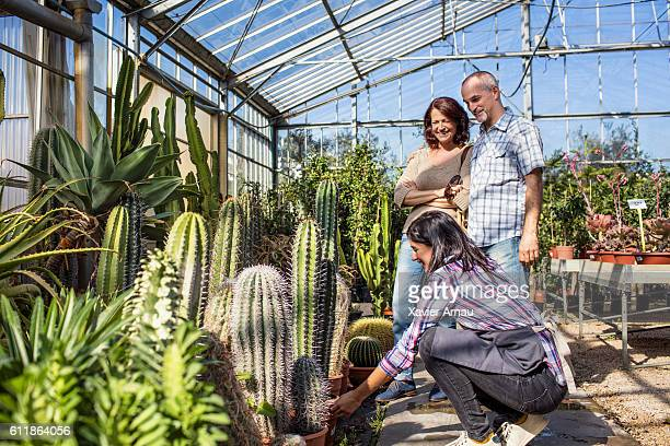 Woman helping choosing cactus to mature couple at garden house