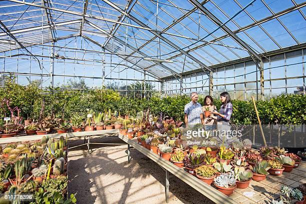 Woman helping choosing cactus to mature couple at gardenhouse