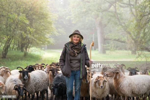 Woman herding sheep Sheep