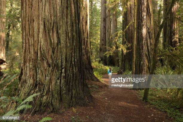 woman hiker explores old growth forest redwood national park california - state park stock pictures, royalty-free photos & images