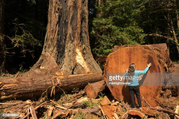Woman hiker explores old growth forest Redwood National Park California