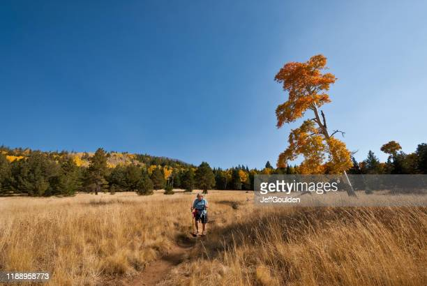 woman hiker on the arizona trail - jeff goulden stock pictures, royalty-free photos & images