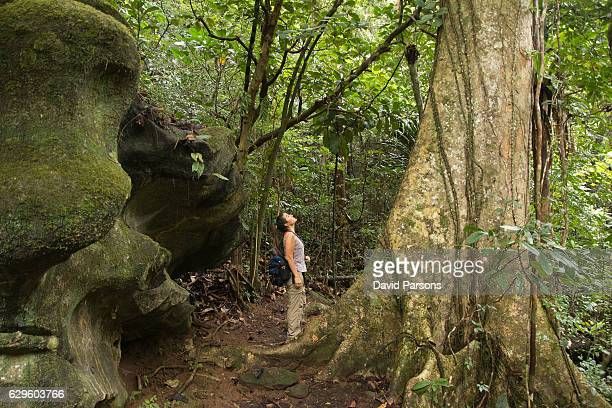woman hikes nosy mangabe island reserve rainforest madagascar - madagascar stock photos and pictures