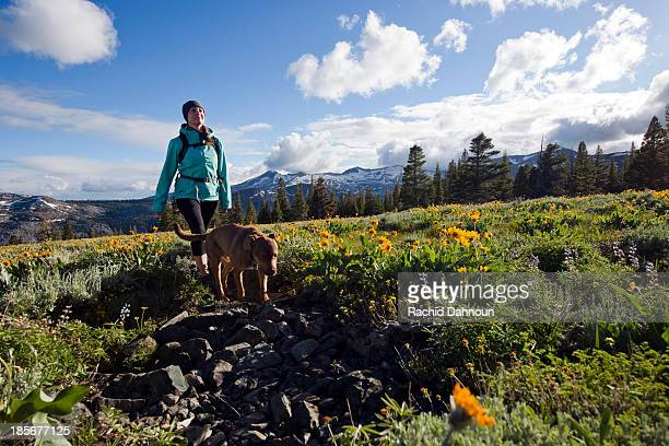 A woman hikes with her dog through a field of wildflowers in Desolation Wilderness with the Crystal Range in the background near South Lake Tahoe, CA.