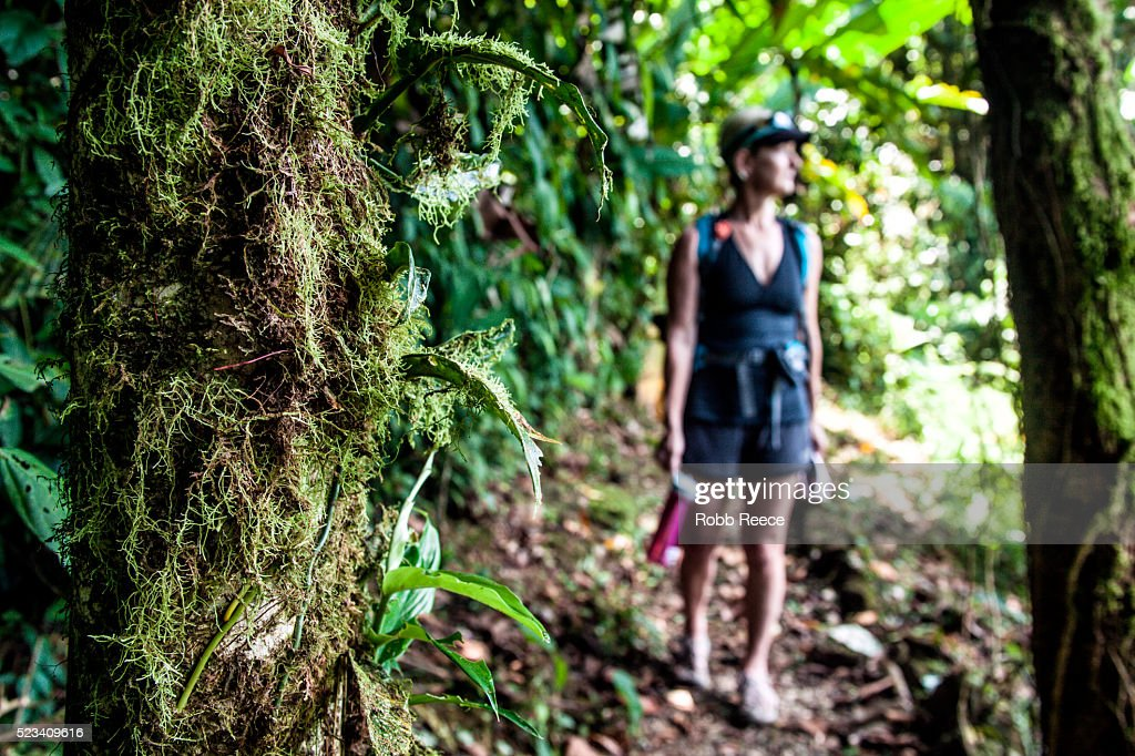 Woman hiking and carrying water bottle on trail in jungle, Costa Rica : Stock Photo