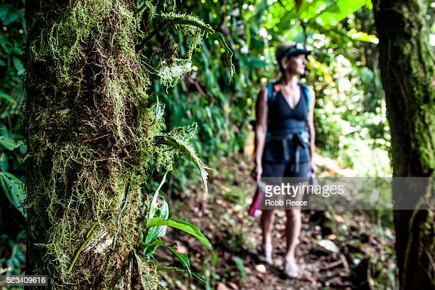 woman hiking and carrying water bottle on trail in jungle, costa rica - robb reece fotografías e imágenes de stock