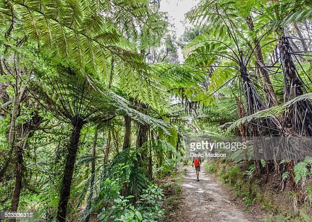 Woman hiking at Abel Head, Abel Tasman National Park, South Island, New Zealan