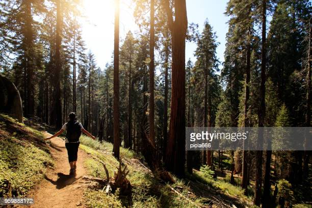 woman hiking at sequoia national park, california - sequoia tree stock pictures, royalty-free photos & images