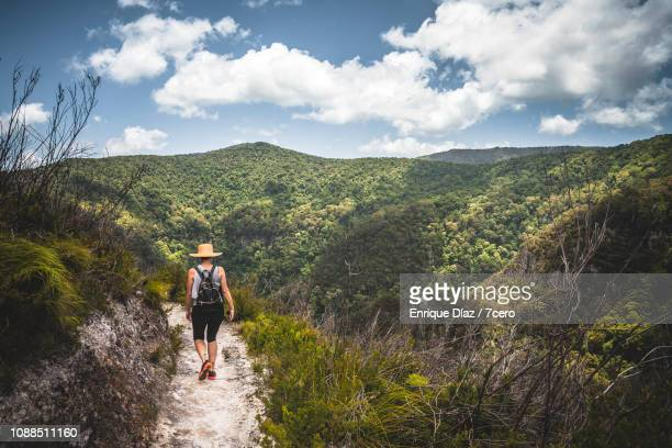 Woman hiking Dave's Creek Circuit, Binna Burra, Queensland