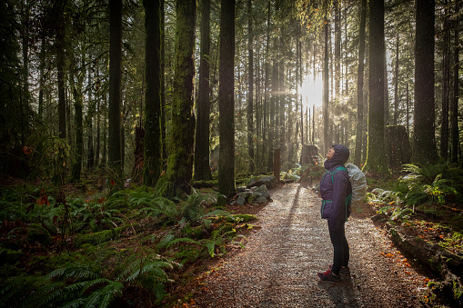 Woman Hiking in Forest During Rainfall, Sunlight Streams in Background 1084413022