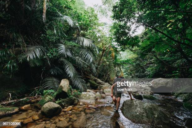 woman hiking in jungle stream, ishigaki, okinawa, japan - regenwald stock-fotos und bilder