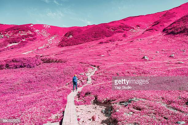 woman hiking in okudainichidake,japan - 富山県 ストックフォトと画像