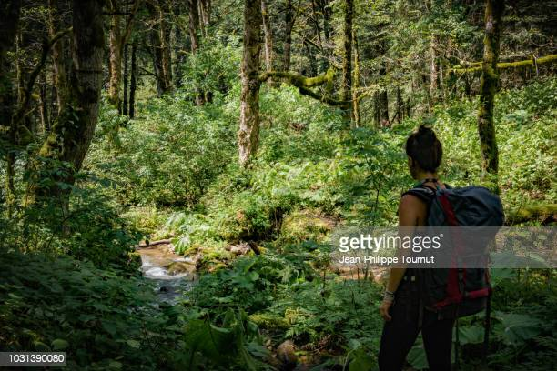 woman hiking in perućica primary forest, a nature reserve in sutjeska national park, bosnia and herzegovina - nationell sevärdhet bildbanksfoton och bilder