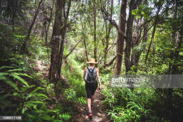 woman hiking in rainforest during summer - queensland stock pictures, royalty-free photos & images