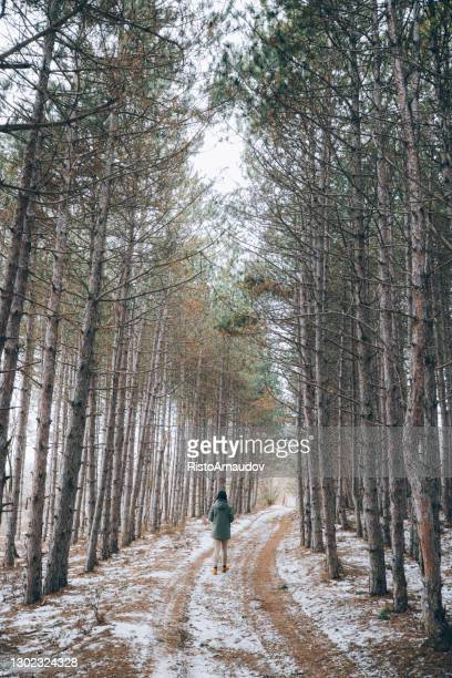woman hiking in the forest - named wilderness area stock pictures, royalty-free photos & images
