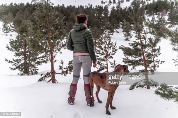 woman hiking the forest in winter with her dog - ゲートル ストックフォトと画像