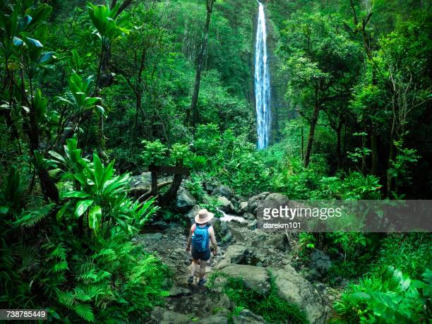 woman hiking towards a waterfall, maui, hawaii, america, usa - water fall hawaii stock pictures, royalty-free photos & images