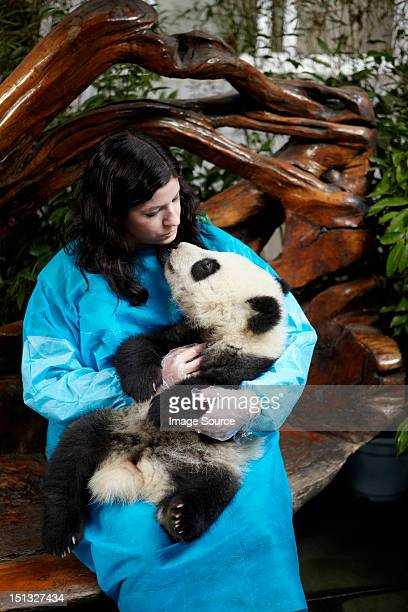 woman holding 6 month old giant panda at chengdu panda breeding research center - panda animal stock photos and pictures