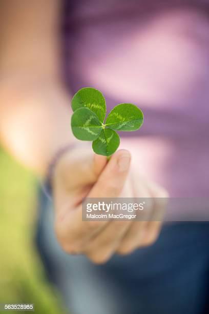 woman holding a 4-leaf clover - 4 leaf clover stock-fotos und bilder
