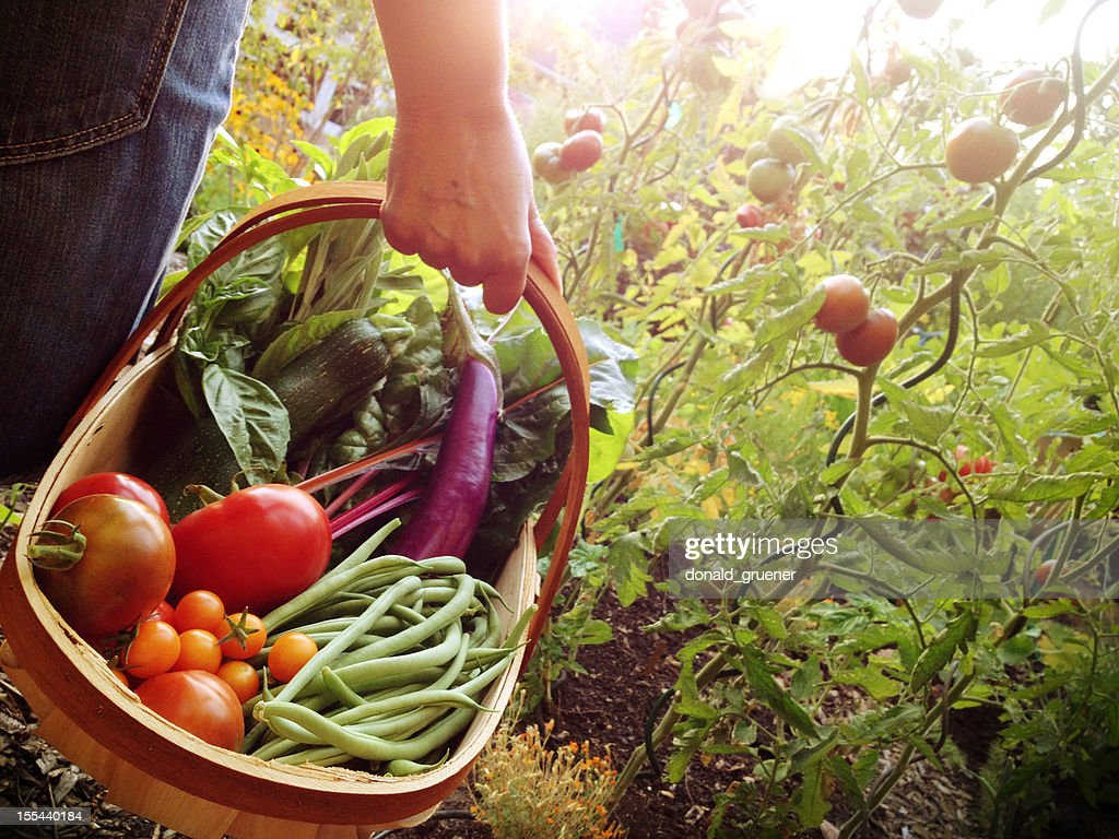 Woman holding a basket filled with vegetables : Stockfoto