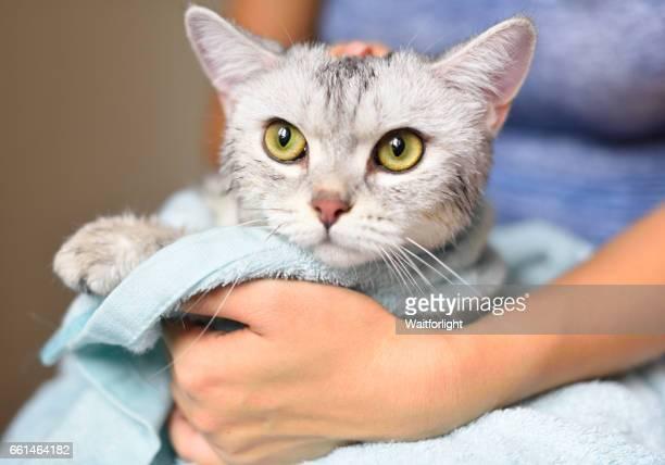 woman holding a cat just been washed - seco - fotografias e filmes do acervo