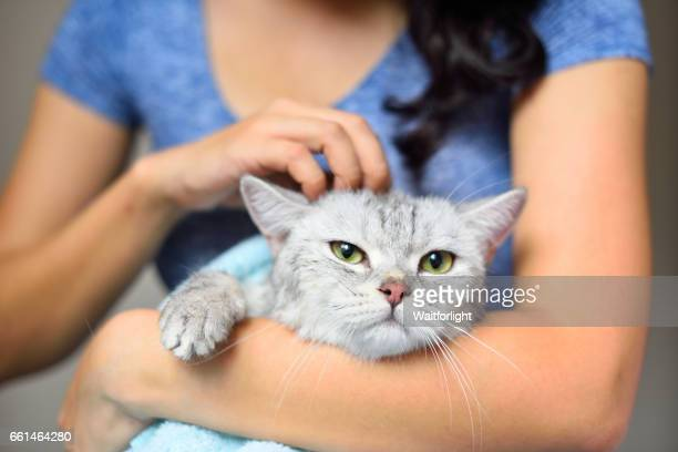 Woman holding a cat just been washed
