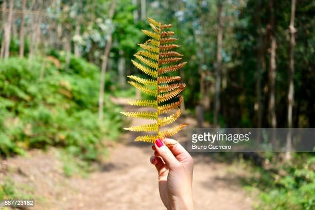 Woman holding a half green half autumn coloured leaf against blurred forest path