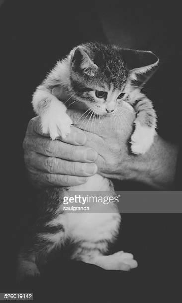 Woman holding a kitten