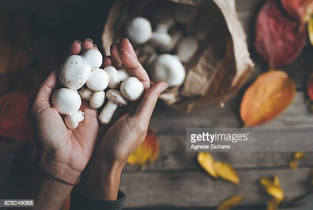 woman holding a mushroom - fungus stock pictures, royalty-free photos & images