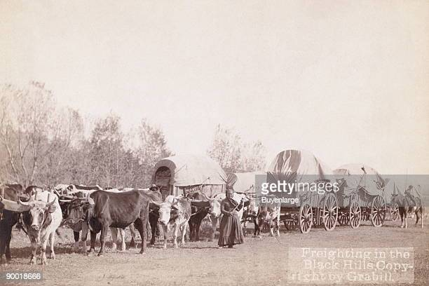 Woman holding a whip standing in front of an ox train