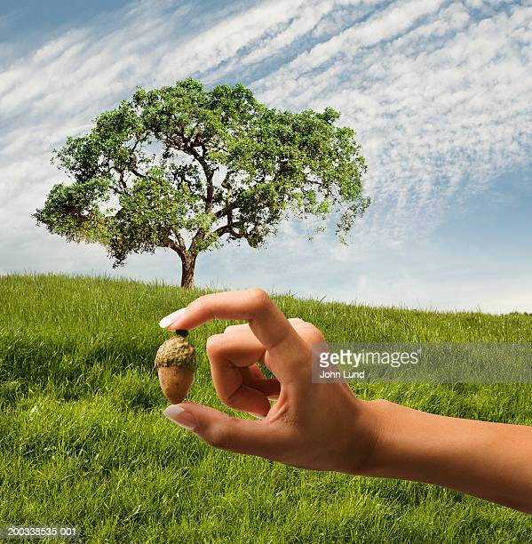 Woman holding acorn in front of oak tree (Digital Composite)