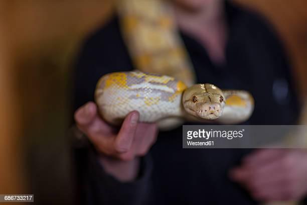 Woman holding an albino python snake