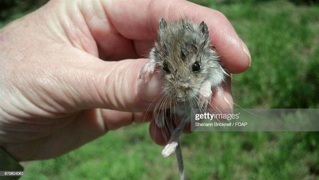 A Woman Holding Baby Mouse Stock Photo - Getty Images